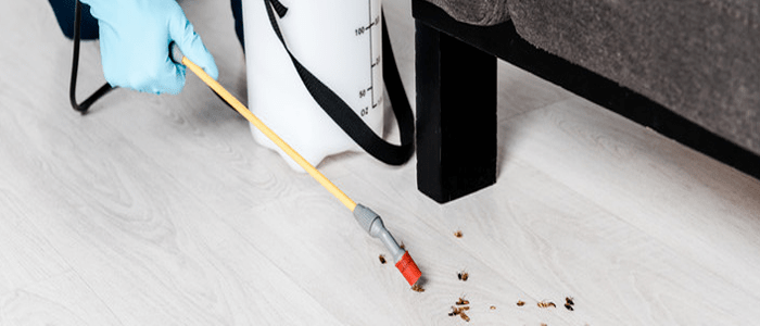Emergency Cockroach Control Services